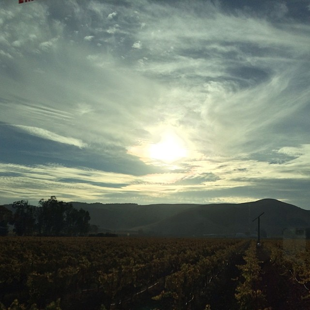 The sky doing a little dance over vineyards in Napa Valley, CA.