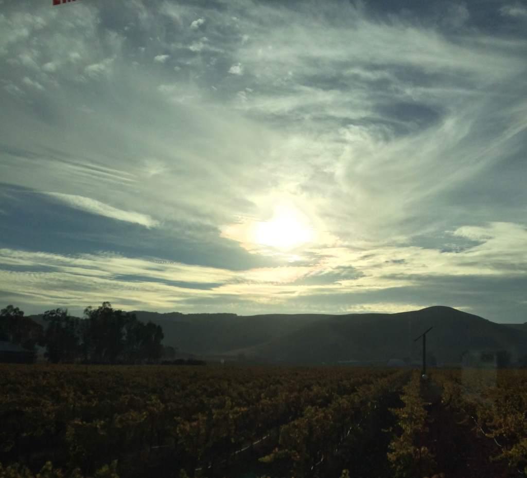 Vineyards -California Wine Country